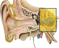 Kentucky Hearing Aid Centers Kentucky